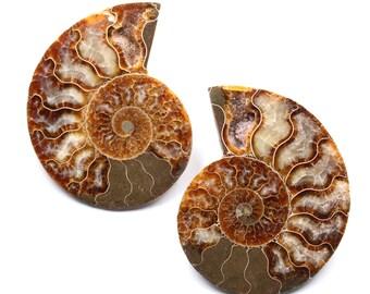 Pair of Ammonite - Fossil polished - Madagascar - 210 gr