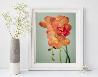 Flower Photography, Floral Wall Art, Large Wall Art Print, Nature Photography, Fine Art Photograph, Flower Wall Decor, Freesia Art Print