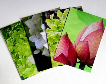 Flower art photographs. Modern floral /nature postcard set. Green, white, pink. Frame-able, affordable original photography prints