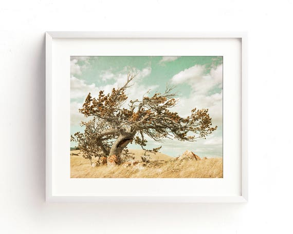 """""""Wind Sculpture"""" - landscape photography"""