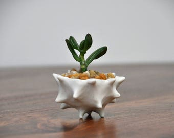 Tiny Conch Planter - White Modern Ceramic Indoor Planter Bowl Modern Planter Ceramic Pot