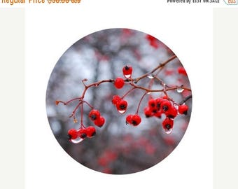50% OFF SALE Winter Home Decor, Red Berries Photograph, Winter, Holiday, Christmas Decor, Grey, Black, Circle, Round Image 8x8 inch Print, W