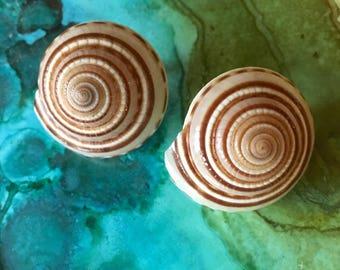 Vintage Spiral Shell Clip On Earrings