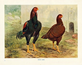 1902 Antique Color Print of Indian Game Chickens