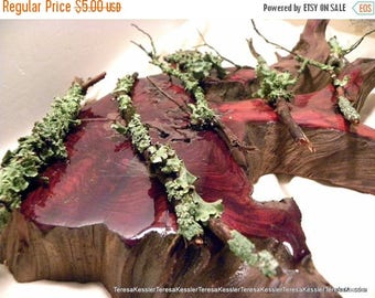 Save25% Tree Branch-Lichens-10+ extra pieces of Wild Leafy Lichens on mini branches plus a larger section of lichen bark