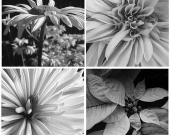 Garden Cards, Floral Cards, Monochrome greeting cards, black and white images, Set of 4 Notecards, Notecards