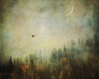 Surreal Forest Fog Photograph, crescent moon bird flying, Dreamy Tree Photo Print, Nature Home Decor foggy ethereal, landscape bedroom art