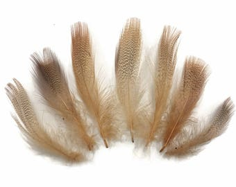 Fluffy Feathers, 1 Dozen - Tan Mallard Duck Flank Plumage Feathers : 575