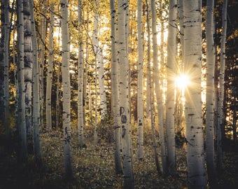 Aspen Trees, fall tree art, Colorado art, sunstar, rustic wall art, cabin decor, sunset aspens photo, aspen tree art, fall photo, nature art