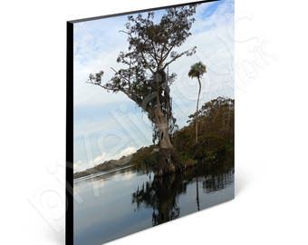 """Blue Cypress Sky Reach - Old Florida Photography - 11"""" x 14"""" Standout Print w/ Black Edging"""
