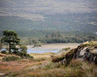 Ireland, Irish, Celtic, Gaeltacht, Gaelic, Maum, County Galway, Connemara, Gold, Heather, Mountain, Evergreens, Wild, Antiqued, Browns
