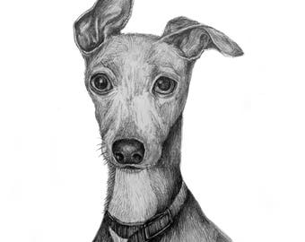 Whippet, Giclee print of pencil drawing.