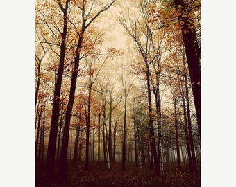 Fall Tree Wall Art: Into the woods Fine Art Photography, woodland print, Nature Photography Forest vertical print Autumn forest print