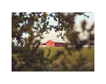 Old Red Barn. Barn Photography. Rustic Home Decor. Country Wall Art. Landscape. Petaluma. Green Hill. Farm. Ranch. Wall Art