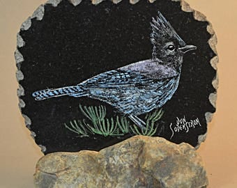 Stellar Jay on black granite tile