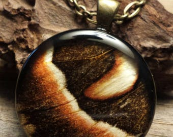 PhbeaD- Large Round Pendant with REAL MOTH WINGS: entomology jewelry, real insect jewelry, real wing jewelry, real butterfly wings