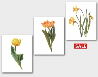 Yellow Flower Prints, Set of 3 Botanical Wall Art (French Country Home Decor, Vintage Cottage Artwork) --- Spring Collection