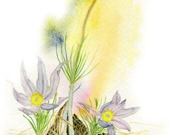 Pasque Flower Prairie Flower First of Spring Blank Note Card
