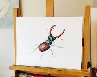 ORIGINAL ARTWORK a Coloured Pencil Drawing of a Beautiful Male Stagbeetle, Detailed artwork, Albert Durer study by Paula Kuitenbrouwer