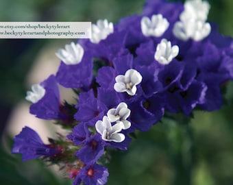 Purple Flowers Macro Fine Art Photo Print