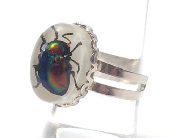 real scarab beetle silver ring