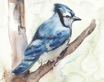 8 x 10 inch fine art print reproduction of a blue jay bird watercolor