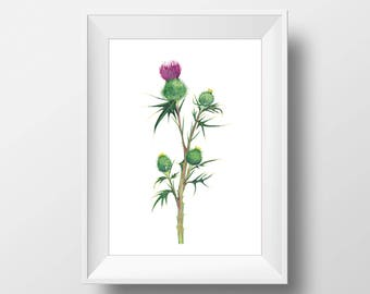 Thistle watercolor illustration art, Thistle Print, Thistle botanical poster, Watercolor illustration print, art print