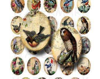 SALE- Vintage Birds - Digital Collage Sheet   - 30x40mm Ovals - INSTANT DOWNLOAD