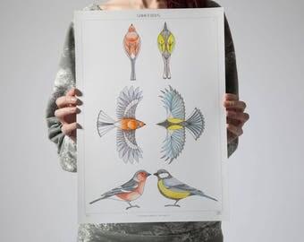 Bird Art Print - Hand drawn Geometric birds. Blue tit and Chaffinch-British Garden Birds - Pen and ink art - watercolour art