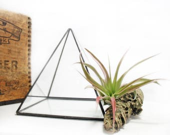 Pyramid Terrarium - Medium / Air Plant Holder / Stained Glass Terrarium