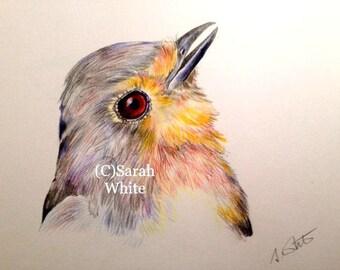 Original Robin drawing