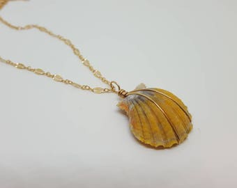 Sunrise Shell Necklace in 14k gold filled chain or Sterling Silver
