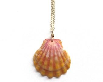 14k gold filled Xlarge Hawaiian sunrise shell necklace