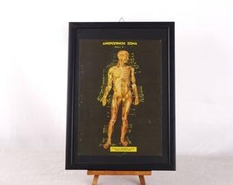 Human Anatomy Poster, Medical Poster, Human Biology Print, Anatomy Wall Art, Human Body Print, Medical Poster, Anatomy Gift, Medical Print,