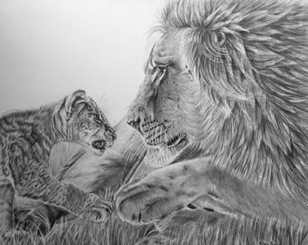"""Lions, Male lion, Cub, Original Pencil Drawing, Animal Art, Home Decor 17""""x 21"""" African Art, Lions Drawing, Wildlife art, Father and Son Art"""