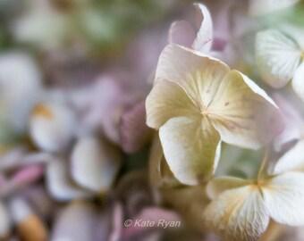 Hydrangeas Floral Print, Girl Room Decor Wall Art, Dried Flower Photo, Dreamy Soft Pastel Decor, Flower Picture, Bedroom Bathroom Wall Art