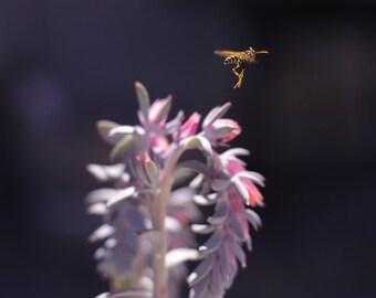 European Paper Wasp   Art Print   Macro Photography
