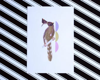 Sunglasses - A5 Colour - Classy Bird Fashion Print - Eco Friendly - Recycled Paper