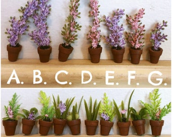 Miniature Potted Plants & Flowers