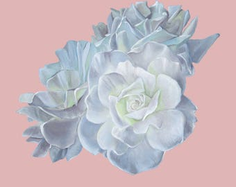White Rose-A4 Fine Art Giclee Print