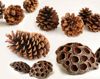 Assorted Dried Pine Cones & Lotus - Rustic Wedding Wooden Wedding Decors, Table Centerpiece, Party Banquets Decors
