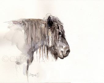 Horse head at rest - study in watercolor