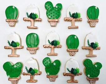 1 Dozen Potted cactus and Succulents in domes Cookies