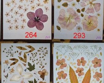 Pressed flowers, pressed petals, real pressed flowers, dried pressed flowers #264 #293 #295 #339
