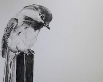 Black Capped Chickadee drawing