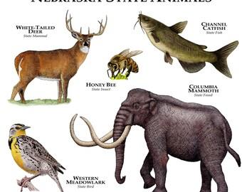 Nebraska State Animals Poster Print