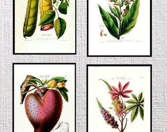 Set of four Flore D'Amerique Floral prints from the 1800's Plates 69,70,71,72.