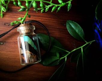 Corked Bottle Butterfly Wing Necklace // Butterfly Wing Bottle // Curiosity Jar // Butterfly Jewelry