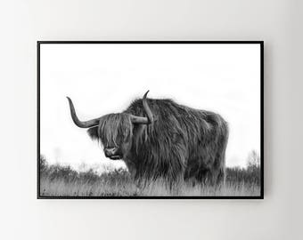 Highland cattle  photography. Bull picture. Cow poster print. Printable photography. Nature picture. Black and white photo. Nature poster.