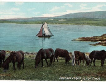 Vintage Real Photo Postcard,SHETLAND PONIES in the Rough,Sailboat ,E HARTMANN G3802,Posted 1907